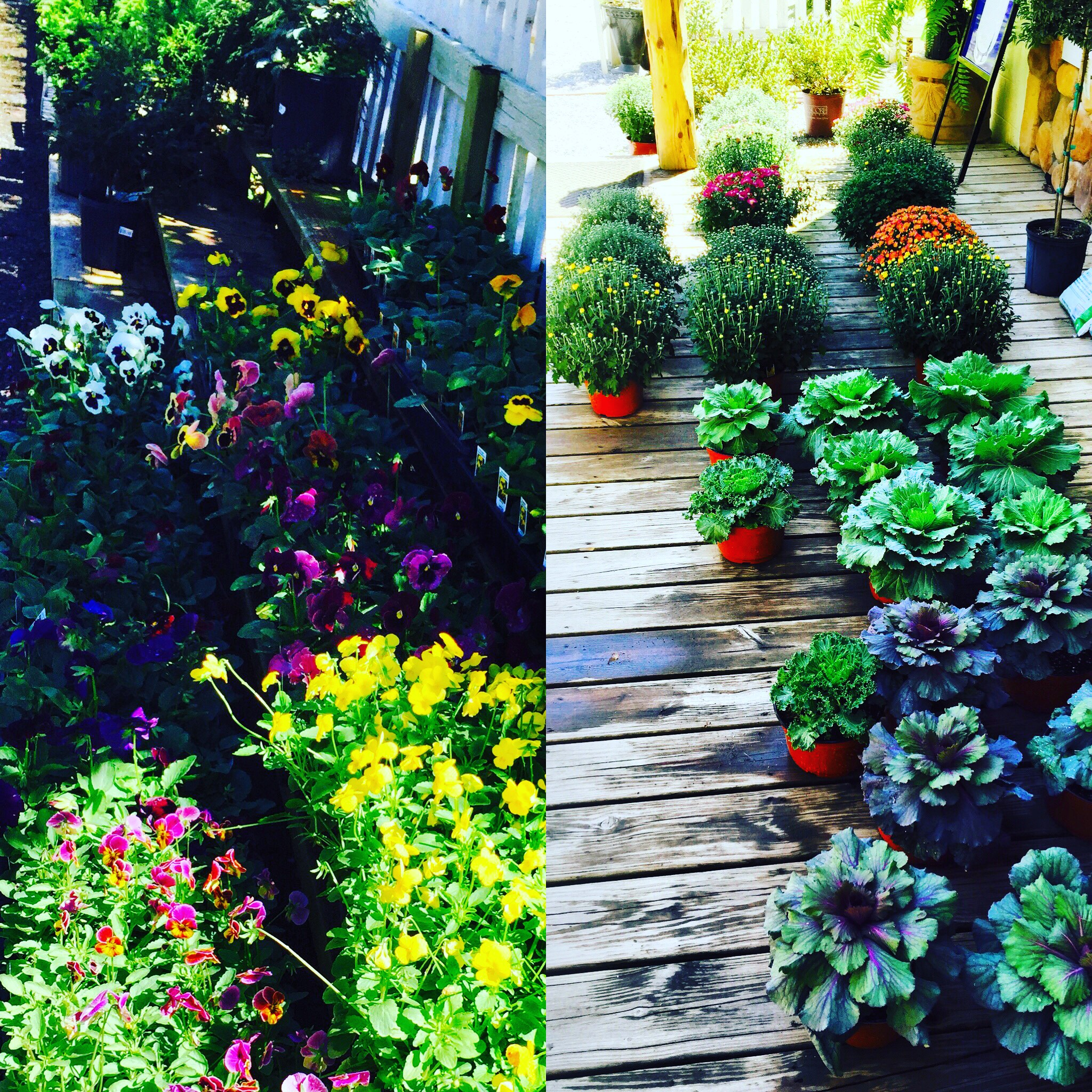 Fall's here ways to take care of your plants!!!